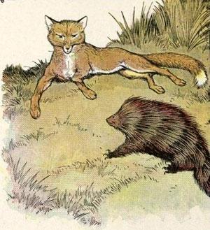 fabula-raposa-e-porco-espinho